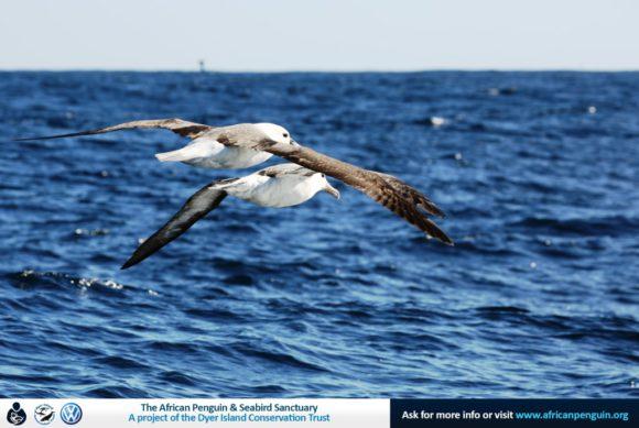 Dyer Island Cruises_Pelagic Birding Gansbaai_web1_20May17