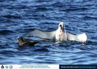 20 May 2017   Pelagic Birding Trip