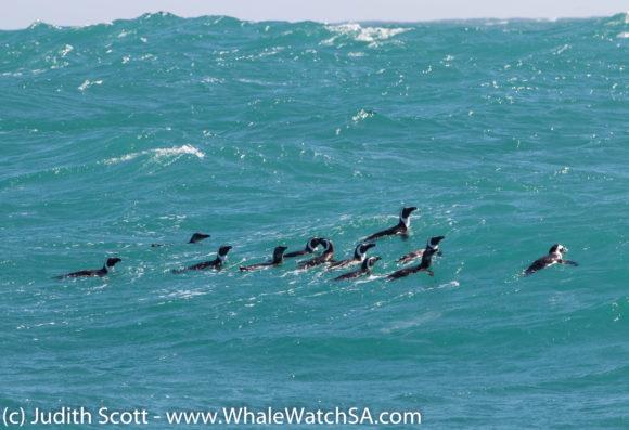 penguin raft