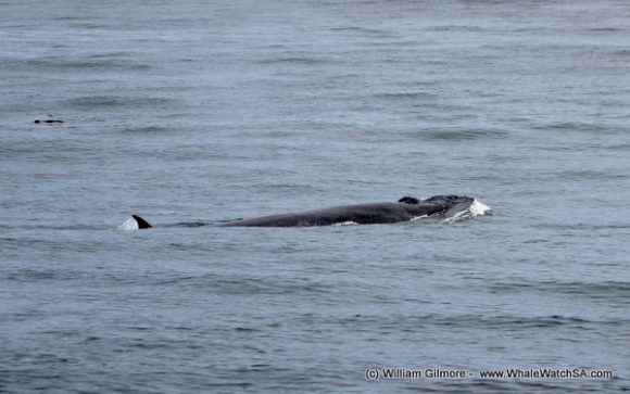 Whale watching (3)