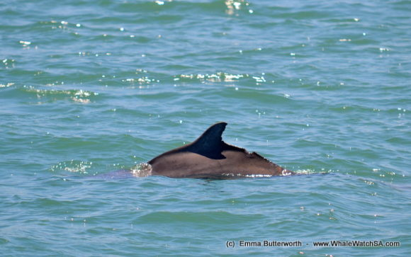 dolphin watching (2)