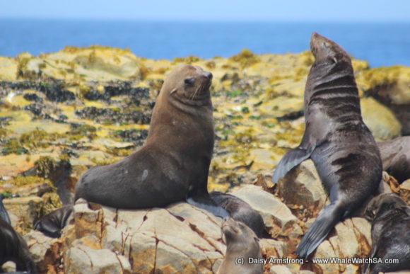 seals (1)