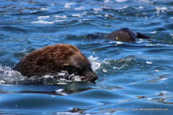 seals (3)