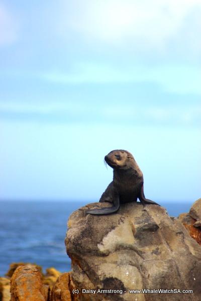 seals (6)