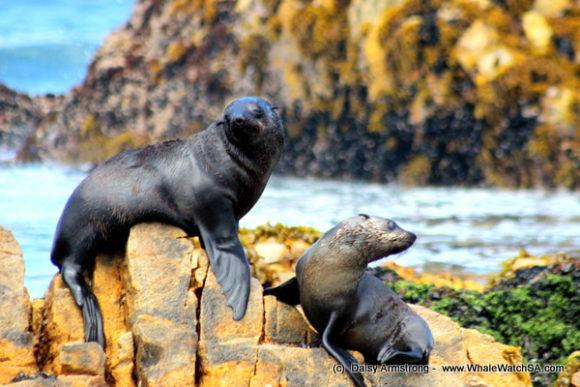 seals (7)