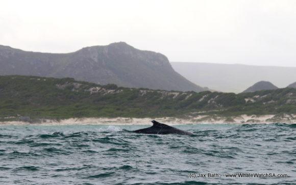 Whale (10)