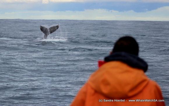 Whale (5)