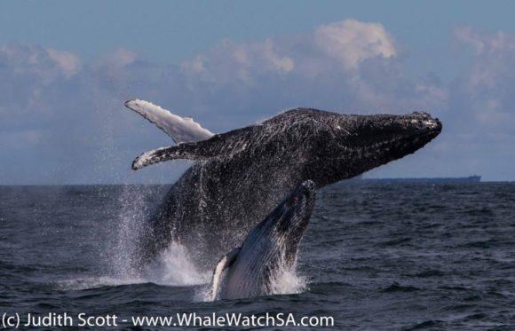 Whale (7)