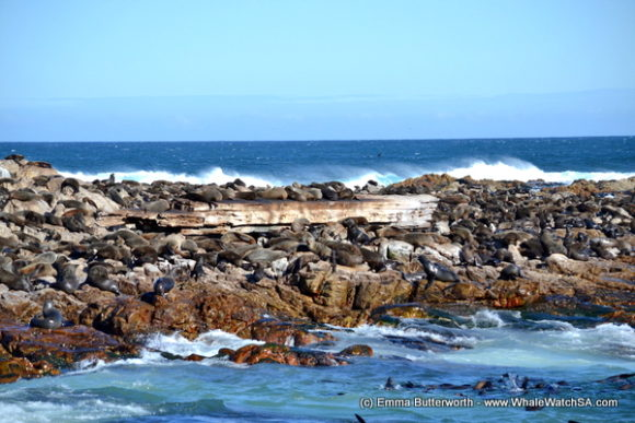 Boat Based Whale Watching Tours Cape Town (3)