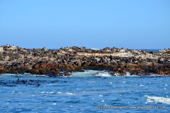 Boat Based Whale Watching Tours South Africa (10)