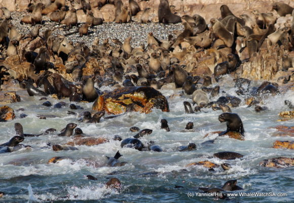 Boat Based whale Watching Tours South Africa Western Cape (7)