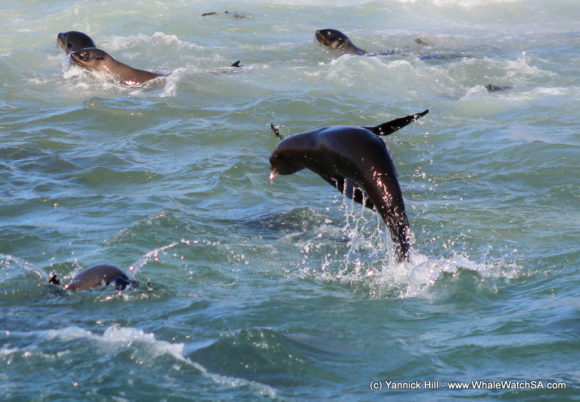 Boat Based whale Watching Tours South Africa Western Cape (8)