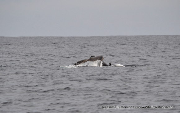 Boat Cruises Whale Watching (12)
