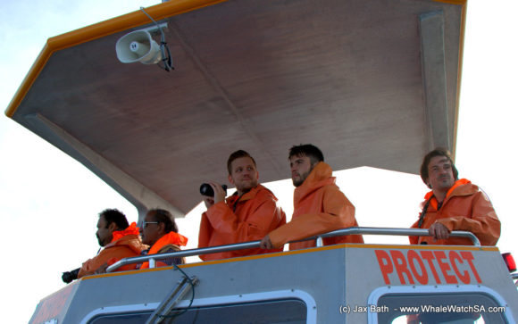 Whale Watching Boat Based Tours Hermanus (10)
