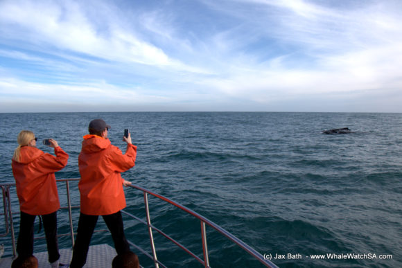 Whale Watching Boat Based Tours Hermanus (2)