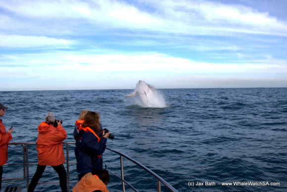 Whale Watching Boat Based Tours Hermanus (3)