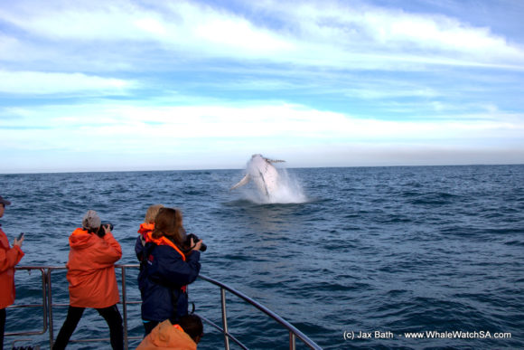 Whale Watching Boat Based Tours Hermanus (4)