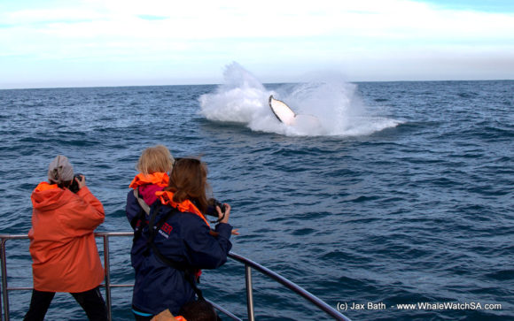 Whale Watching Boat Based Tours Hermanus (5)