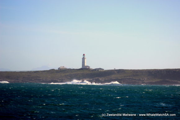 Whale Watching Eco Tours Cape Town Gansbaai (11)