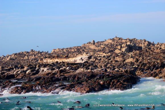 Whale Watching Eco Tours Cape Town Gansbaai (13)