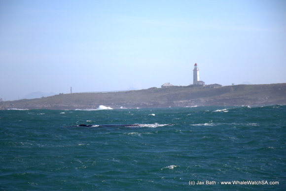 Whale Watching Eco Tours Cape Town Gansbaai (2)
