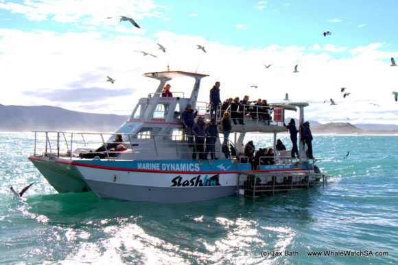 Whale watching South Africa Boat Based Tours (3)