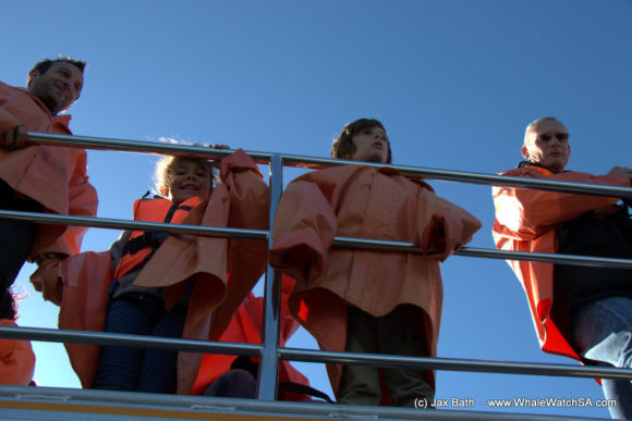 Whale watching South Africa Boat Based Tours (4)