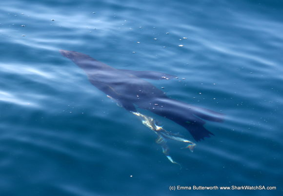 Humback Whale Boat Tours (2)