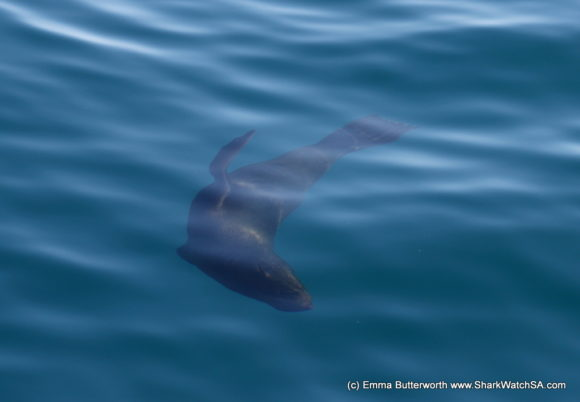 Humback Whale Boat Tours (3)