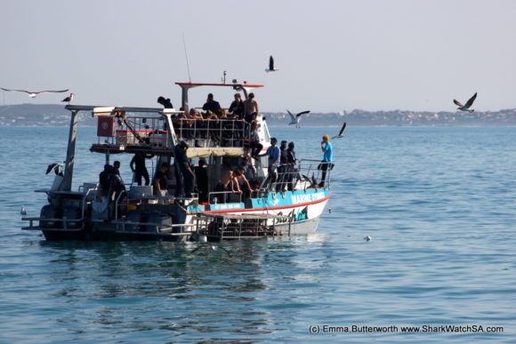 Humback Whale Boat Tours (7)