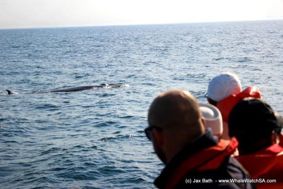 Marine Dynamics Boat Based Whale watching Tours Gansbaai South Africa Marine Big 5 (11)