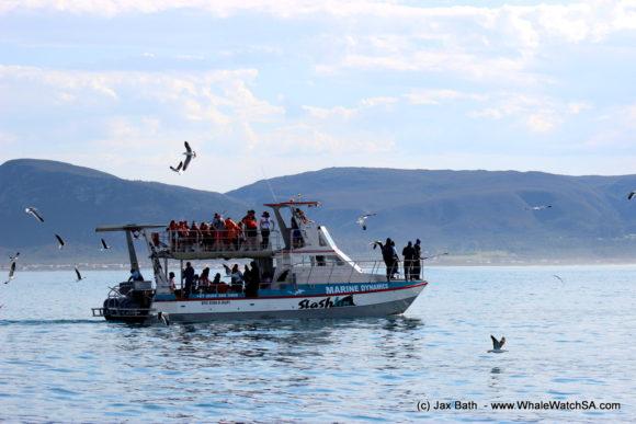 Marine Dynamics Boat Based Whale watching Tours Gansbaai South Africa Marine Big 5 (2)