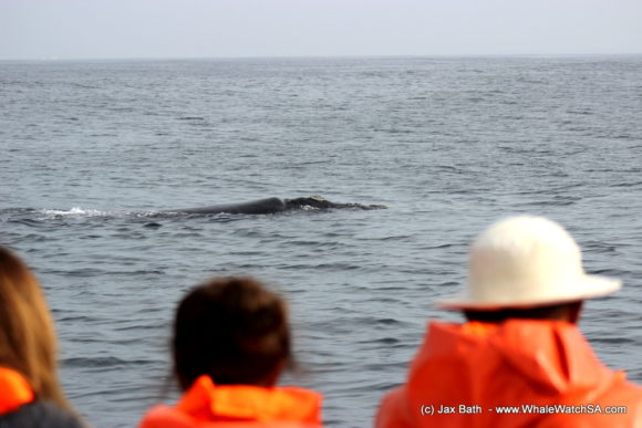 South Africa Whale Watching Tours Boat Based Hermanus (5)