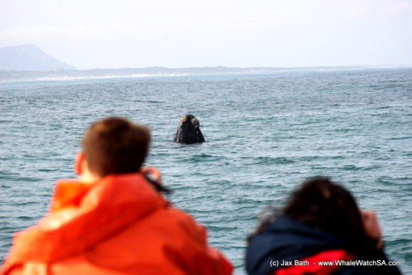 South Africa Whale Watching Tours Boat Based Hermanus (6)