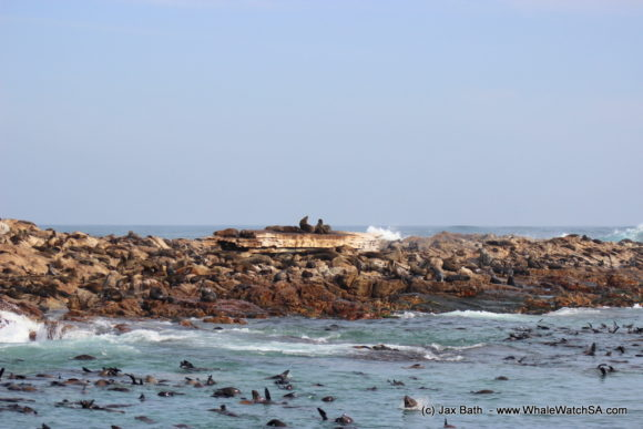 South Africa Whale Watching Tours Boat Based Hermanus (8)