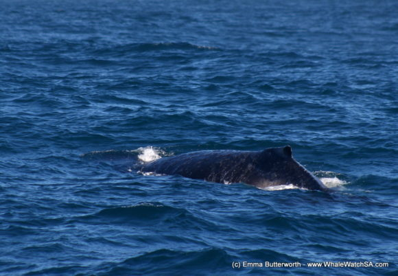 Whale Based Boat Tours (3)