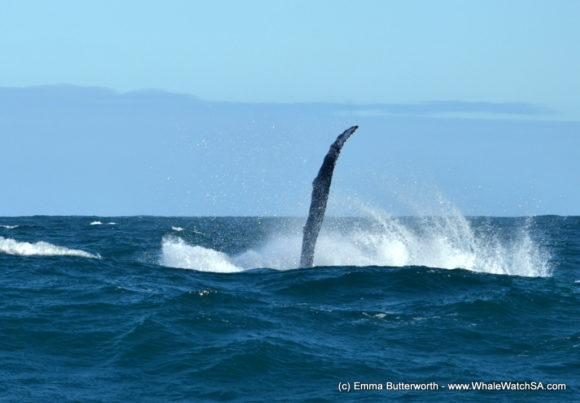 Whale Based Boat Trip (2)
