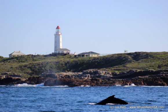 Whale Watching Boat Based eco Marine Safaris Dyer Island Cape Town South Africa (17)