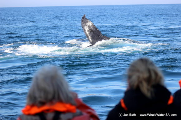 Whale Watching Boat Based eco Marine Safaris Dyer Island Cape Town South Africa (21)