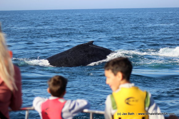 Whale Watching Boat Based eco Marine Safaris Dyer Island Cape Town South Africa (22)