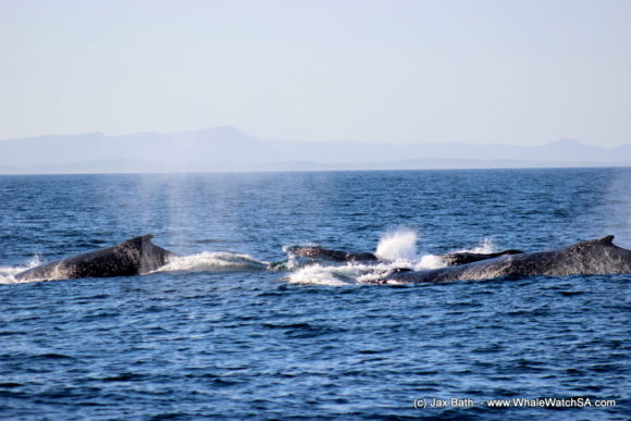 Whale Watching Boat Based eco Marine Safaris Dyer Island Cape Town South Africa (23)