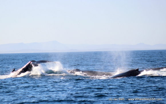 Whale Watching Boat Based eco Marine Safaris Dyer Island Cape Town South Africa (24)