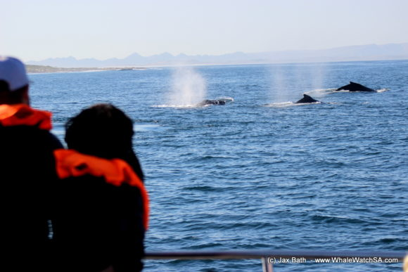 Whale Watching Boat Based eco Marine Safaris Dyer Island Cape Town South Africa (4)