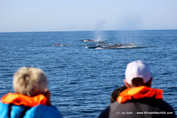 Whale Watching Boat Based eco Marine Safaris Dyer Island Cape Town South Africa (5)