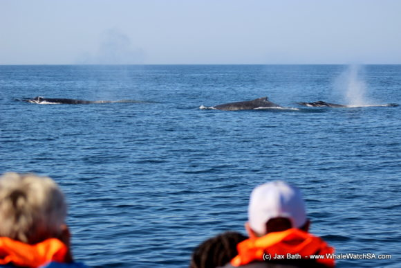 Whale Watching Boat Based eco Marine Safaris Dyer Island Cape Town South Africa (7)