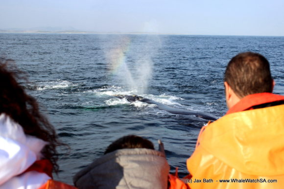 Whale Watching South Africa Boat Based Tours Gansbaai Wildlife Encounters (6)
