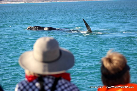 Whale watching Boat Based Tours South Africa Marine Big 5 Eco safari (10)