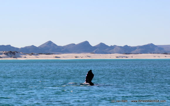 Whale watching Boat Based Tours South Africa Marine Big 5 Eco safari (13)