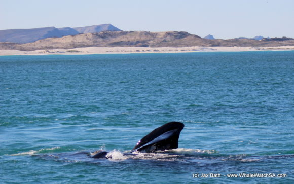 Whale watching Boat Based Tours South Africa Marine Big 5 Eco safari (7)