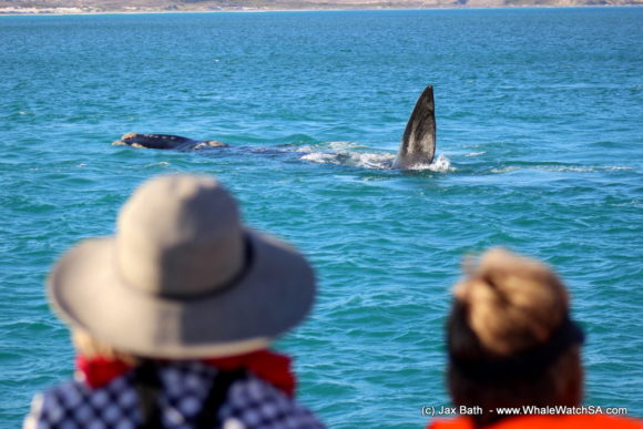 Whale watching Boat Based Tours South Africa Marine Big 5 Eco safari (9)